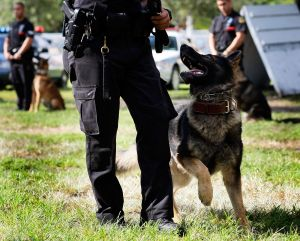 K-9 Police Teams Hold Graduation Ceremony In Miami