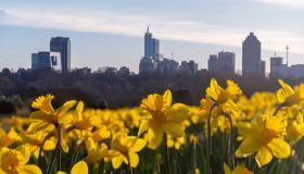 Yellow Flowers Growing In City Against Sky
